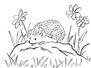 320x240 For Kid Hedgehog Coloring Pages 91 In Line Drawings With Hedgehog