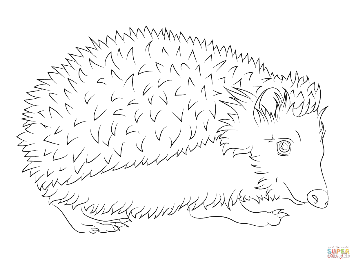 1228x916 Hedgehog Coloring Page Free Printable Coloring Pages