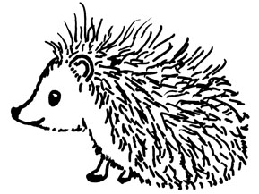 289x217 Drawn Hedgehog Rolled