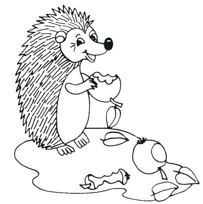 676x679 Hedgehog Color Hedgehog Pictures To Color Hedgehogs Coloring Pages