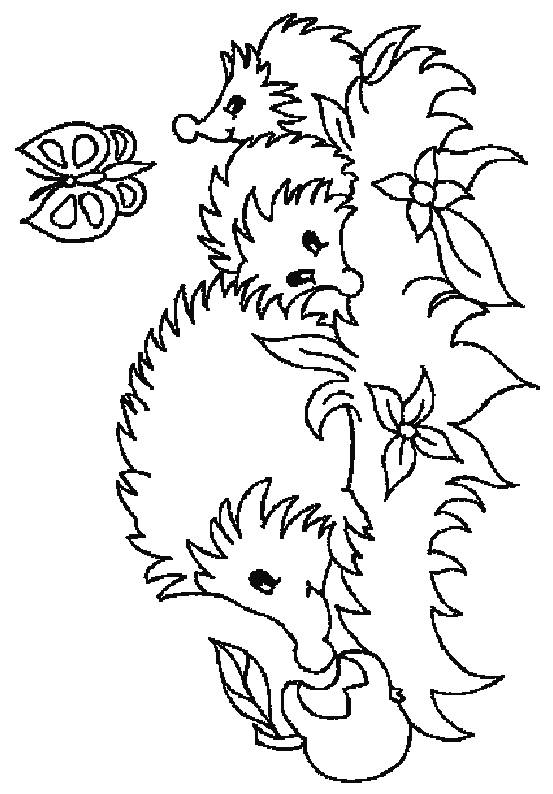 553x794 Hedgehog Coloring Pages Back To Coloring Pages Hedgehog Category
