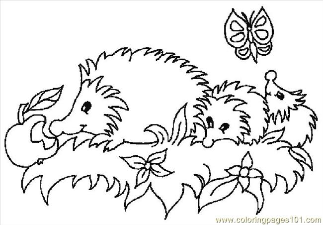 650x452 Hedgehogs 01 (27) Coloring Page