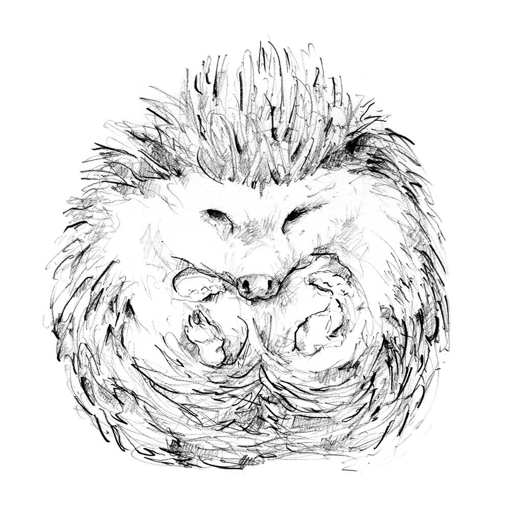 1000x1000 Hedgehog Drawing, Illustration, Graphite