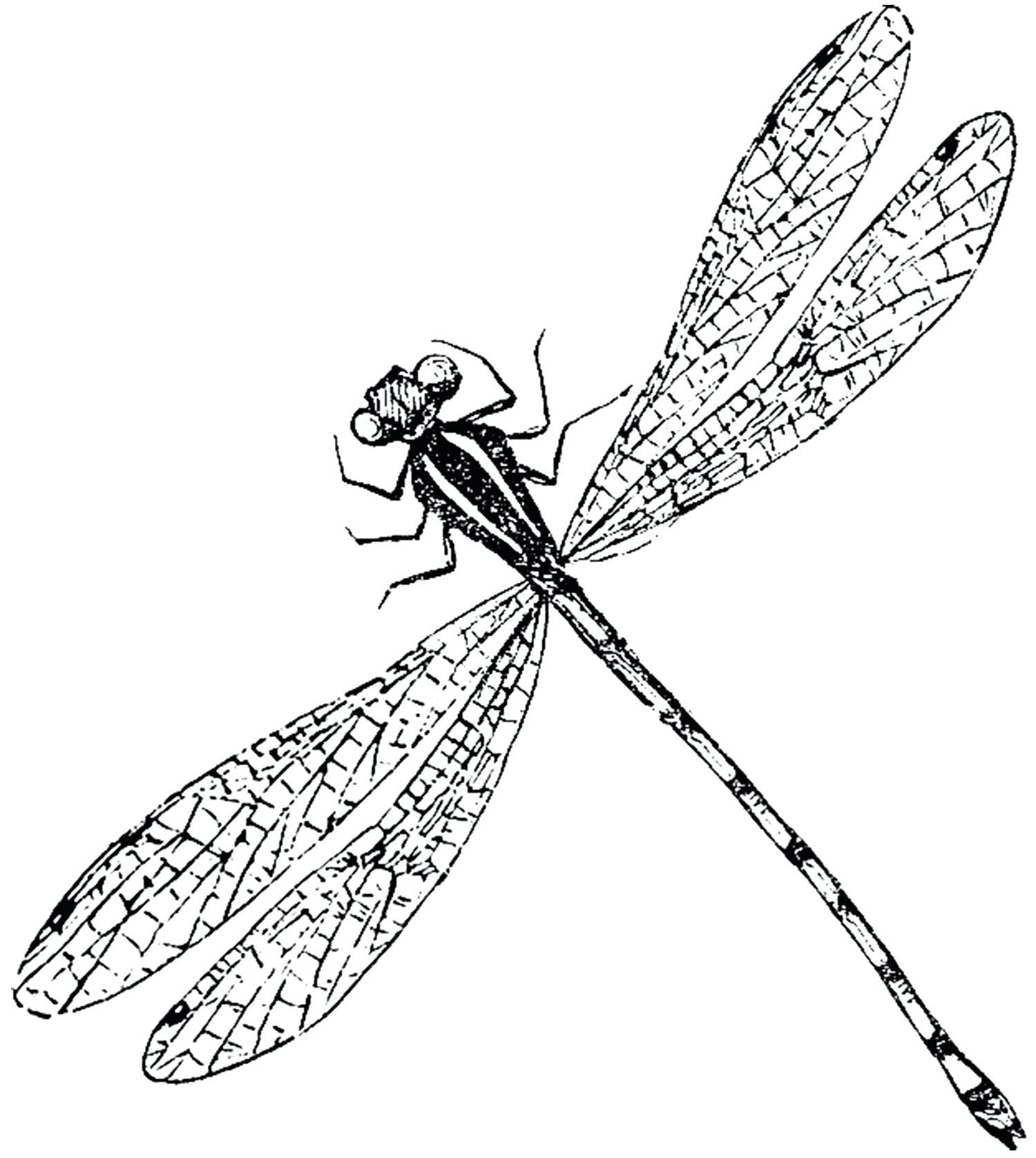 1500x1677 Diagram Dragonflies Eye Diagram Dragonfly Drawings Designs