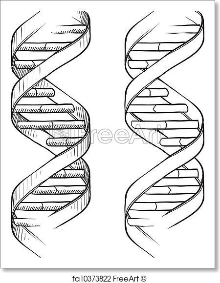 450x580 Free Art Print Of Dna Double Helix Sketch. Doodle Style Genetic