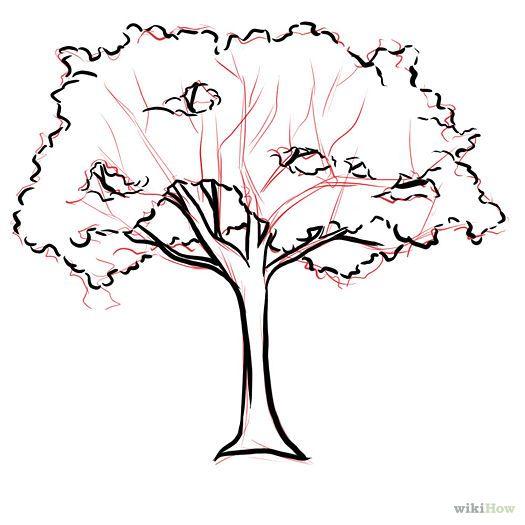 Hemlock Tree Drawing