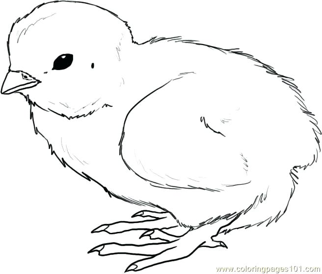 656x559 Baby Chick Coloring Pages To Print Printable For Funny Image Girl