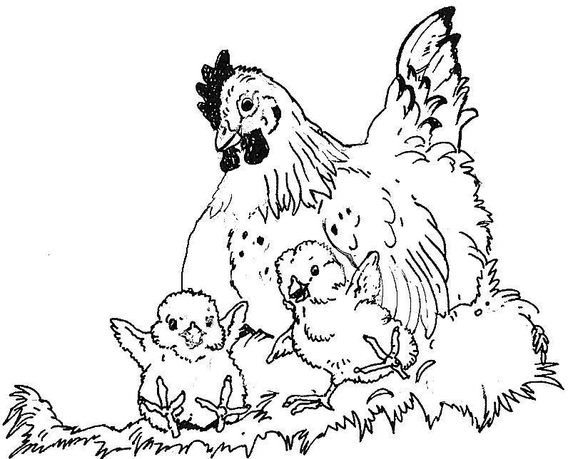 796x644 Hen Chicks Coloring