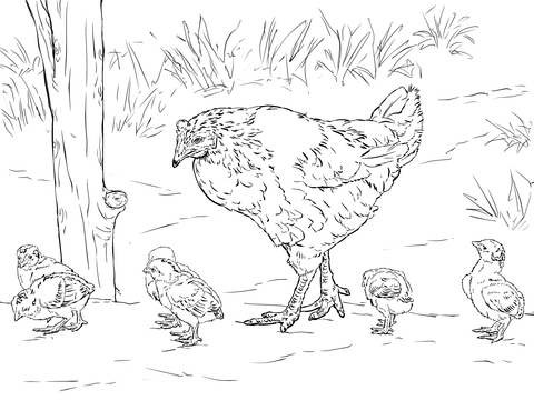 480x360 Hen With Chicks Coloring Page Free Printable Coloring Pages