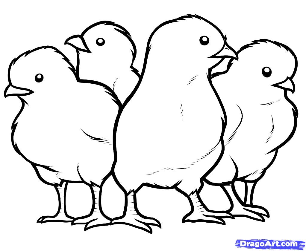 1022x840 Printable Pictures Of Baby Chicks How To Draw Chicks, Chicks