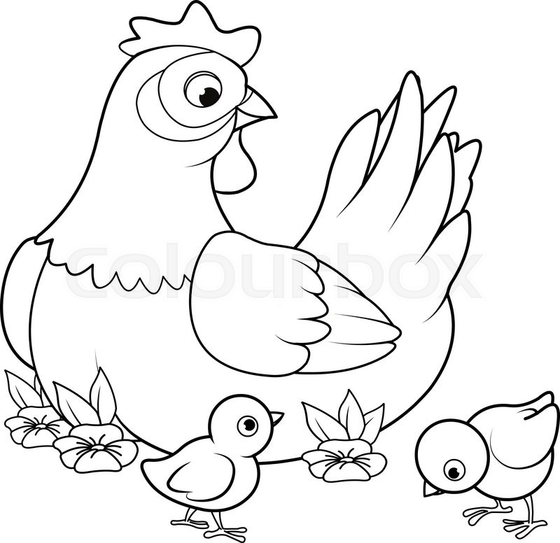 800x776 Coloring Page Of Mother Hen With Its Baby Chicks Stock Vector