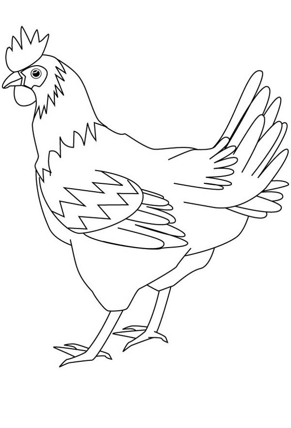 600x880 Drawing Healthy Hen Coloring Page Coloring Sky