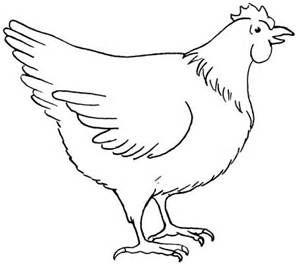 Hen Drawing Images
