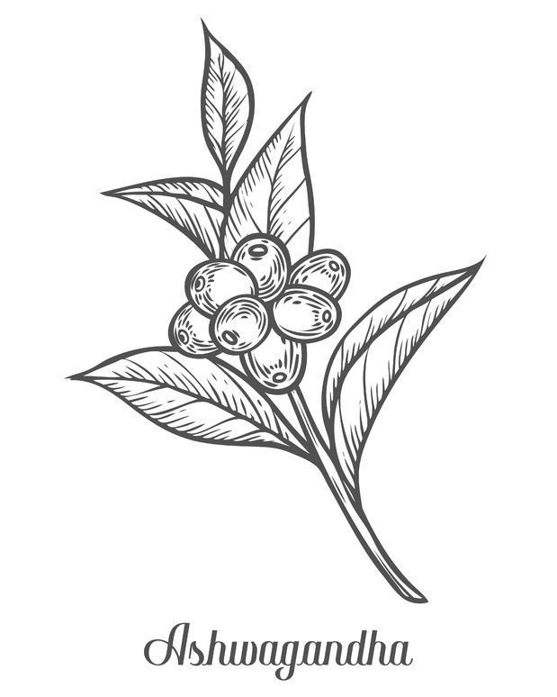 herb drawing at getdrawings com