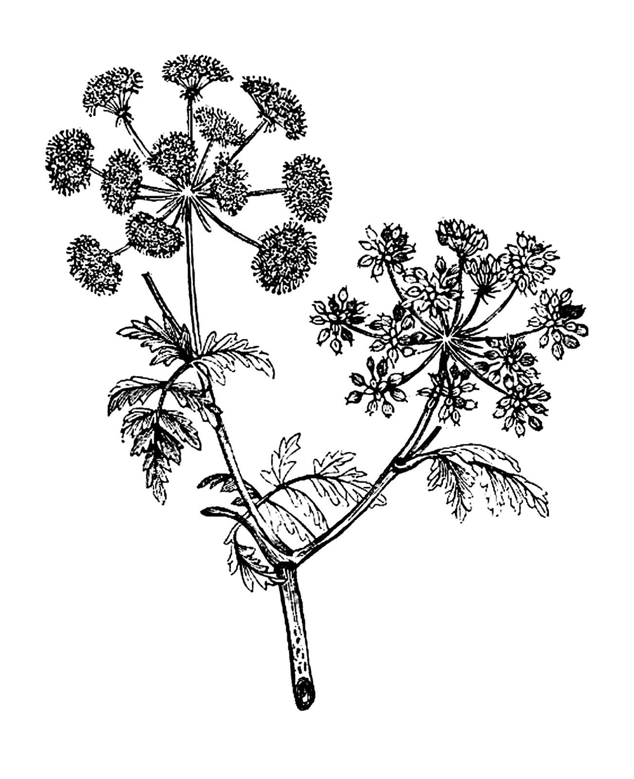 1304x1600 Digital Stamp Design Free Flower Digital Stamp Vintage