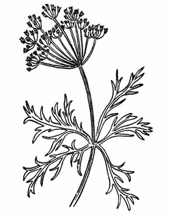 340x430 Cataway.jpg 1 Line Drawings For Embroidery And Applique