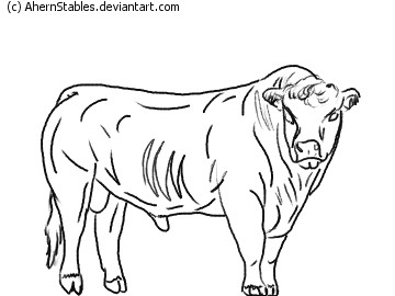 360x270 Hereford Bull 2 Line Art By Ahernstables