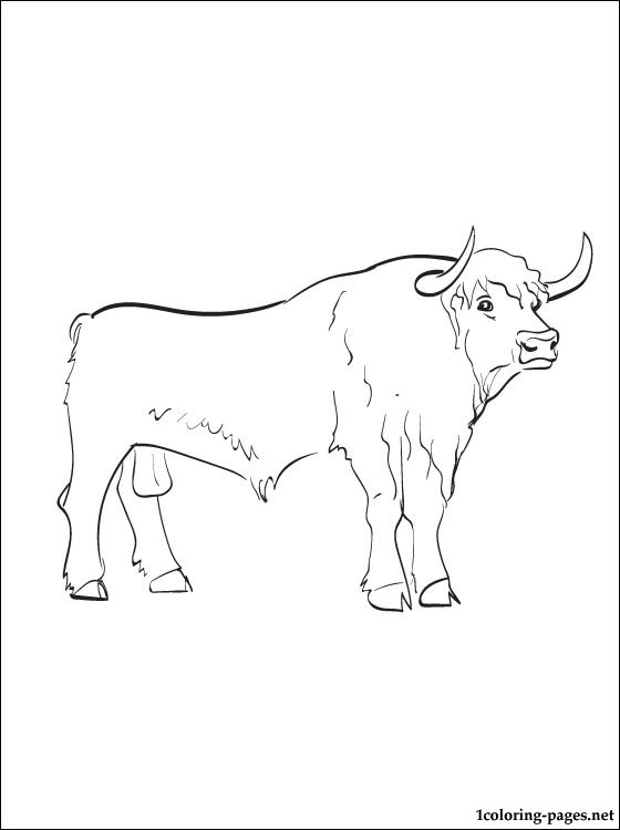 560x750 Hereford Bull Coloring Pictures Chianina Bull