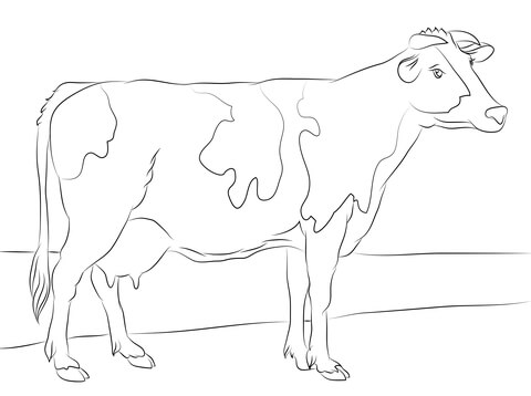 480x358 Holstein Cow Coloring Page Free Printable Coloring Pages