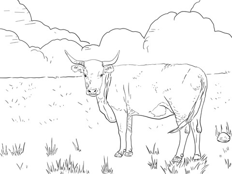 480x360 Horned Hereford Cow Coloring Page Free Printable Coloring Pages