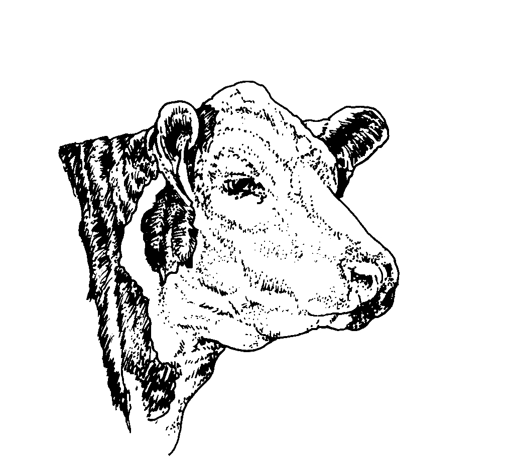 1008x937 American Hereford Art Library