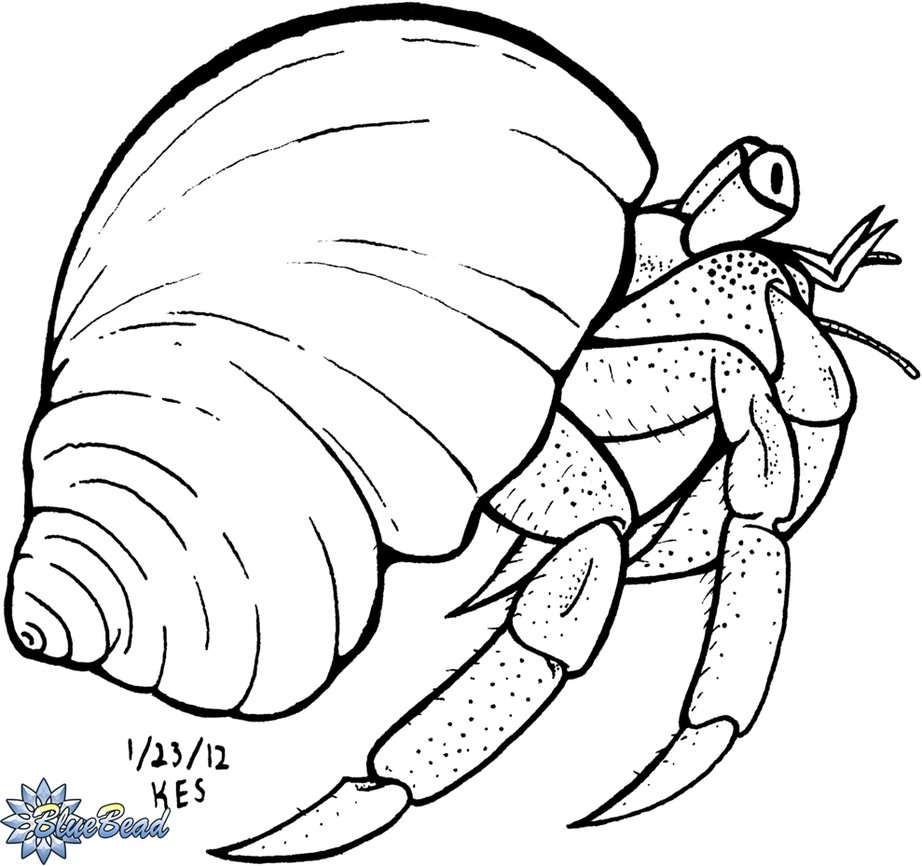 Hermit Crab Facts For Kids Images >> Interesting Facts About The ...