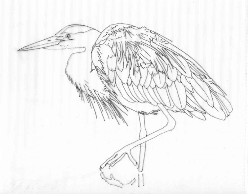 800x626 Heron