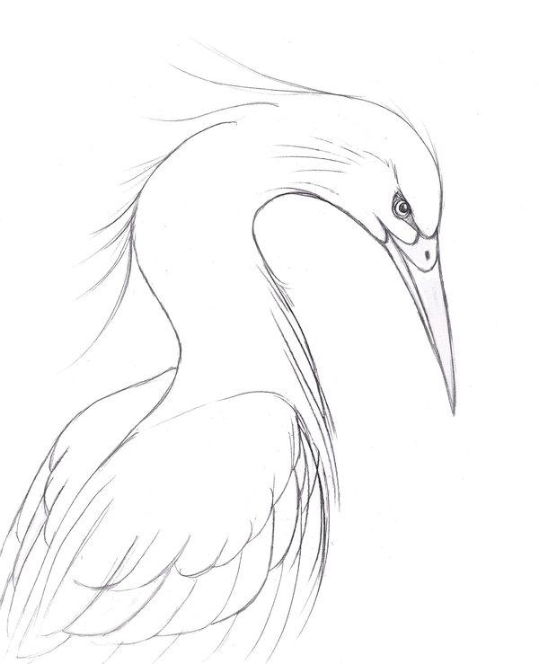 600x739 Heron Sketch By Fethyre