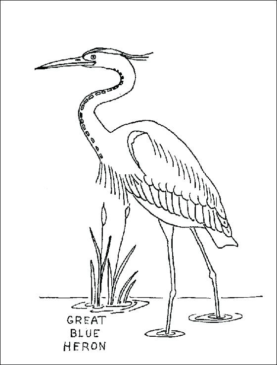 560x737 Amazing Great Blue Heron Coloring Page Image