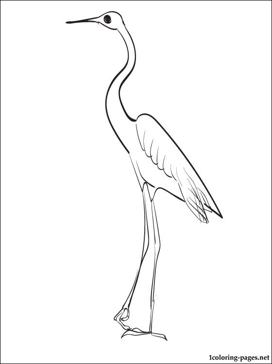560x750 Heron Printable And Coloring Page Coloring Pages