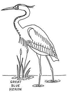 236x317 Learn How To Draw A Great Blue Heron (Birds) Step By Step