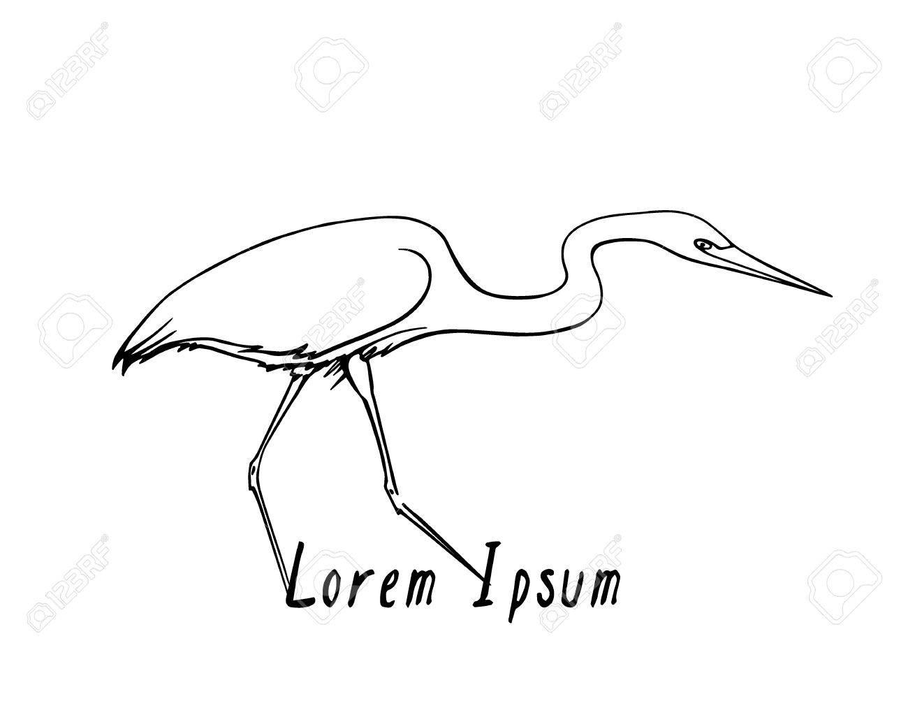 1300x1040 Vector Illustration Of Hand Drawn Walking Heron. Beautiful Ink