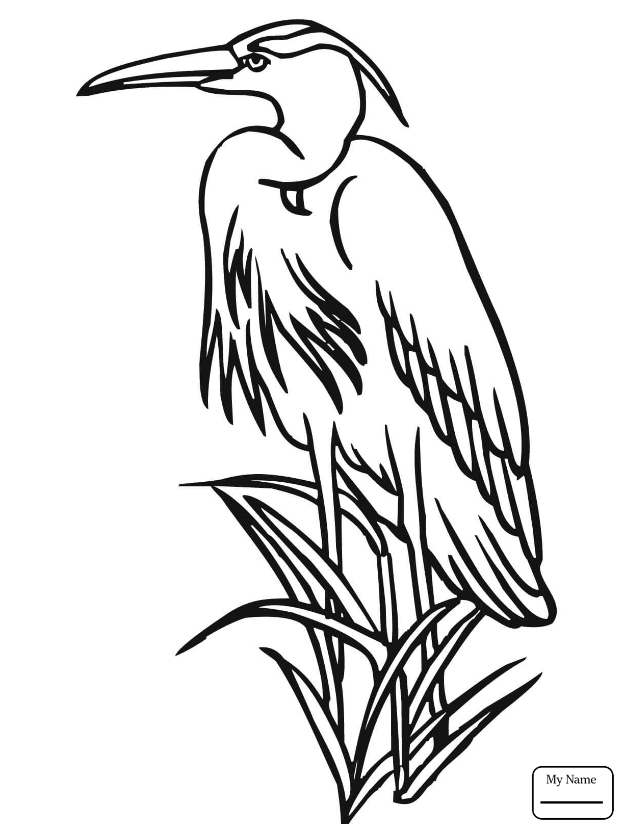 1224x1632 Heron