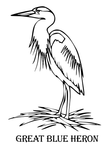 360x480 Blue Heron Coloring Page Free Printable Coloring Pages