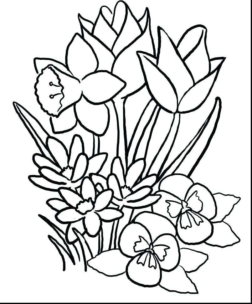 805x971 Hibiscus Flower Coloring Pages Luau Coloring Pages Coloring Pages