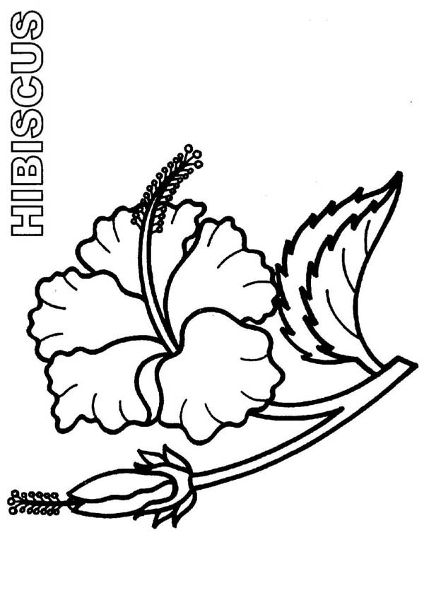 600x849 Bloom And Burgeon Hibiscus Flower Coloring Page Color Luna