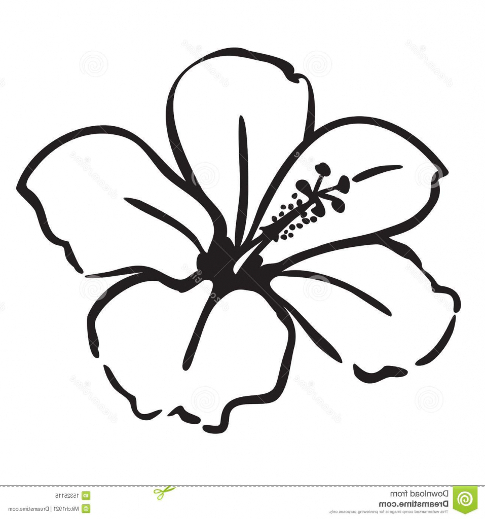 957x1024 Simple Drawing Hibiscus Flower Simple Drawing Of Flowers 1000