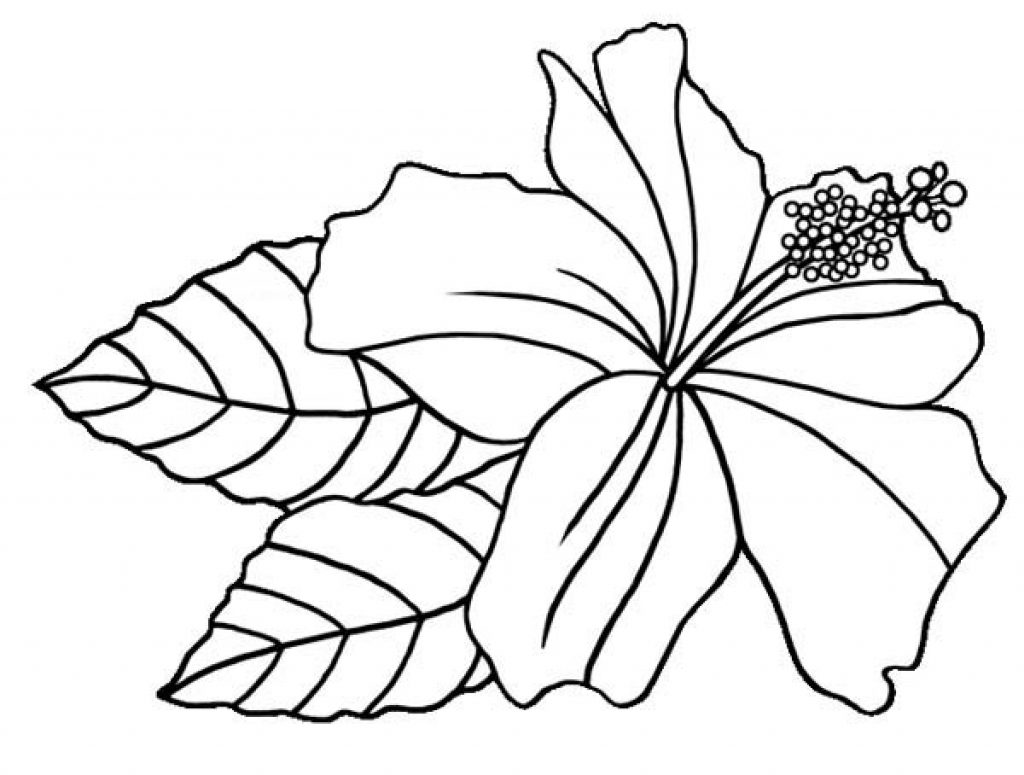 1024x775 Drawn Hibiscus Detail Drawing And Coloring Flower Page For Kids