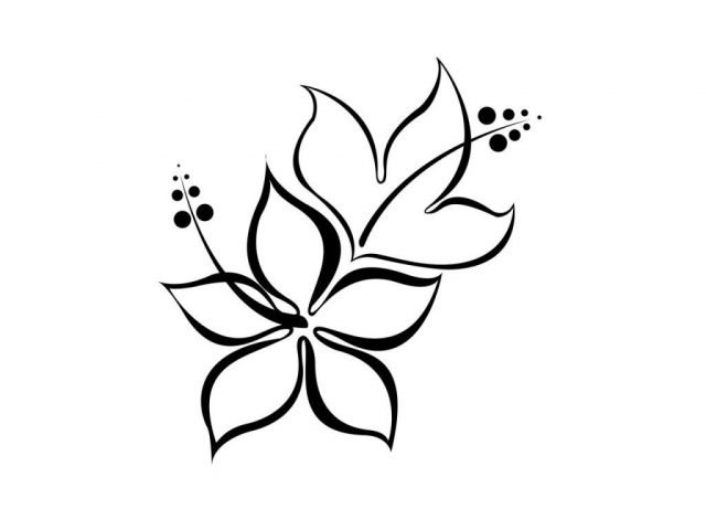640x480 Flower Line Drawing Simple Hibiscus Drawing Flower Line