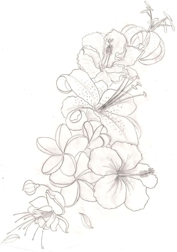 736x1044 Drawn Lily Hibiscus Flower