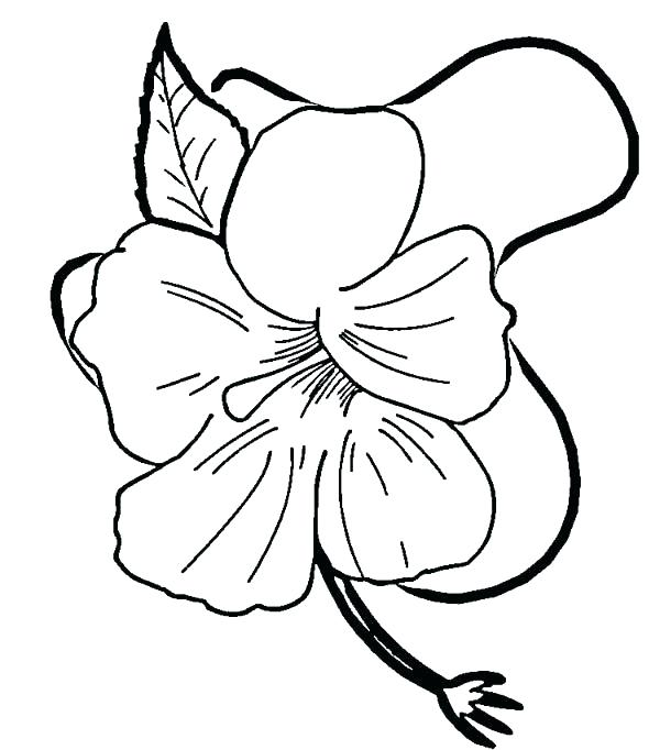 600x682 Hibiscus Flower Coloring Page Hibiscus Flower Drawing Coloring