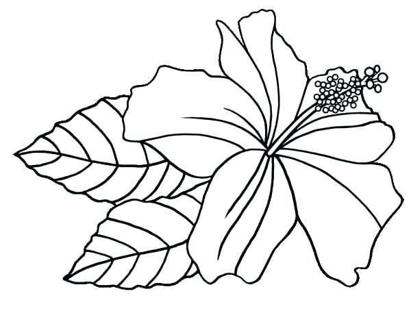 600x454 Hibiscus Flower Coloring Pages Hibiscus Flower Coloring Pages