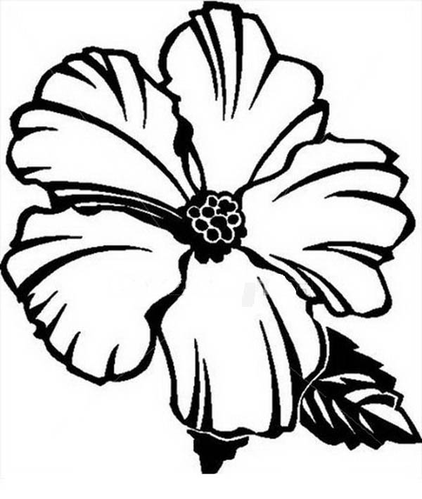 600x709 Hibiscus Flower Drawing Coloring Page Hibiscus Flower Drawing