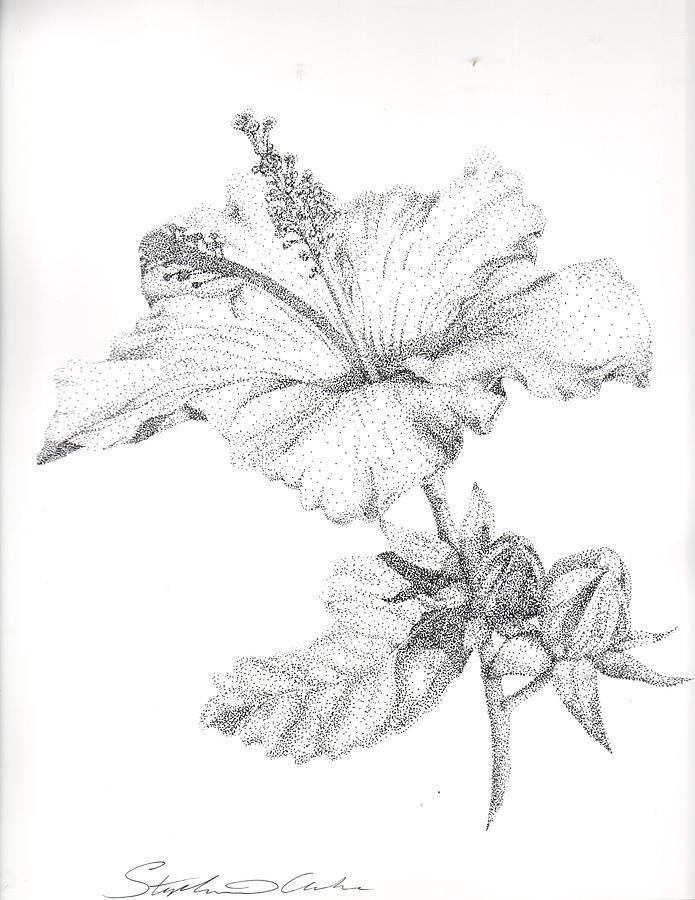695x900 Hibiscus Flower Drawings
