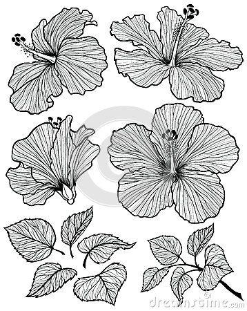 358x450 Hibiscus Flower Set Art Hibiscus Flowers, Hibiscus