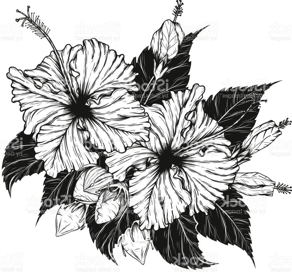 Hibiscus flower drawing at getdrawings free for personal use 1024x955 top 10 hibiscus flower vector by hand drawing image izmirmasajfo