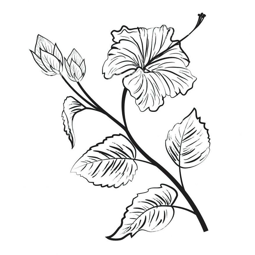 878x878 Hawaiian Hibiscus Flower Drawings Drawings Nocturnal Hawaiian