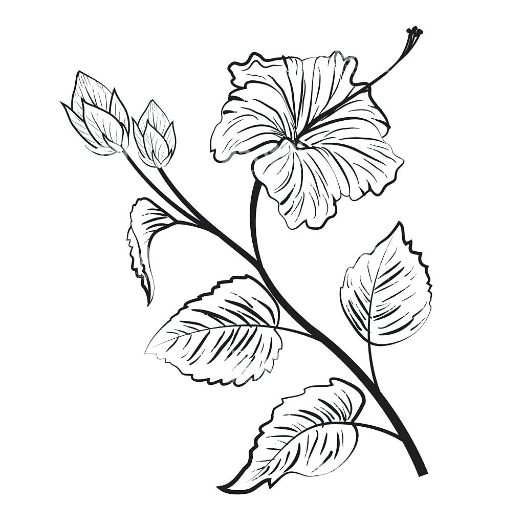 Hibiscus Tattoo Outline: Hibiscus Flower Drawing At GetDrawings