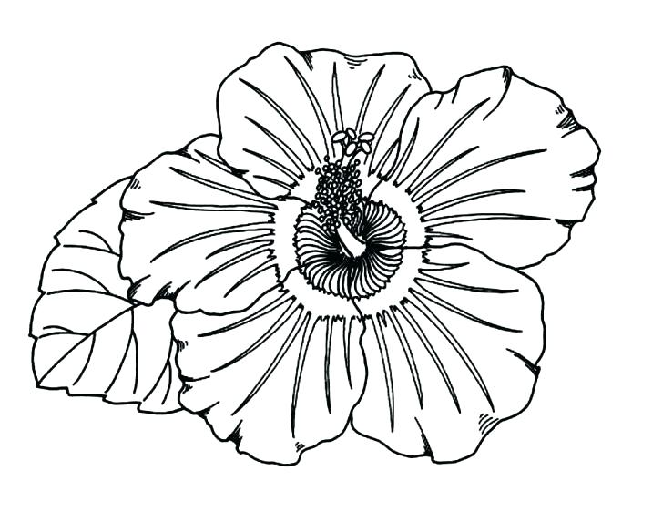728x584 Free Hibiscus Flower Coloring Pages Instant Download Page Fresh