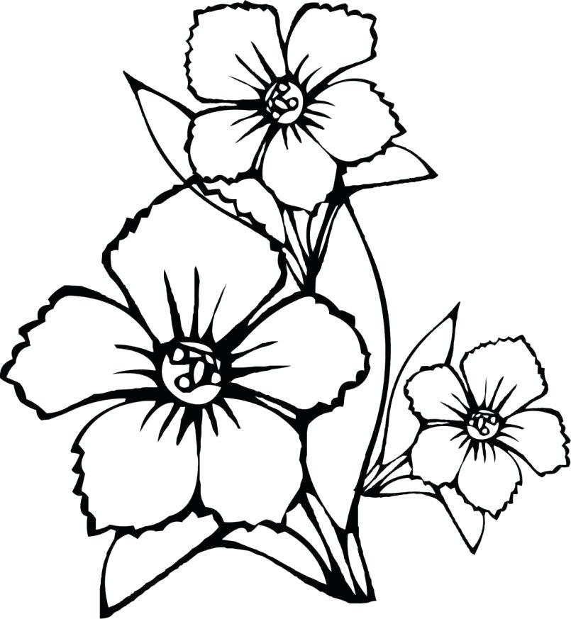 805x873 Free Printable Hibiscus Flower Coloring Pages Color For Kids Page